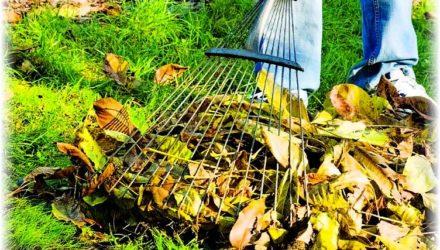 Подготовка сада к зиме — что надо сделать осенью (октябре, ноябре)