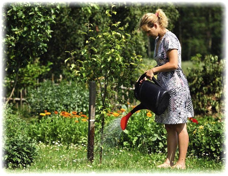 уход за яблонями - полив, удобрение