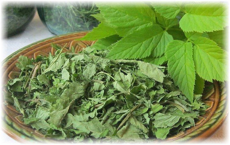 применение травы сныти и ее лекарственные свойства