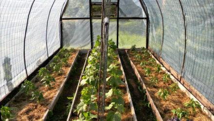 Выращивание хорошего урожая в теплице — 4 основных правила обустройства