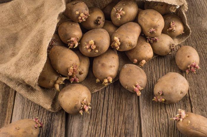 выращивание картофеля - разные способы