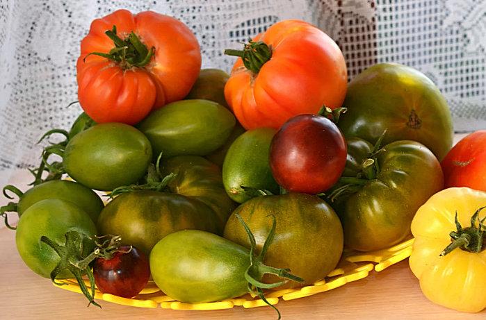 дозревание помидоров