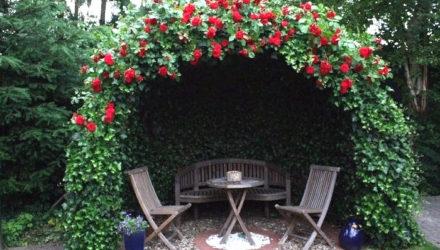 Вьющиеся растения для декоративного украшения сада — 10-ка самых неприхотливых