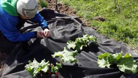 Борьба с сорняками в саду и огороде своими силами — 12 простых способов
