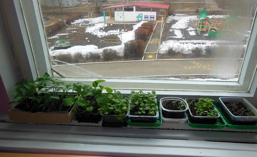 огород на подоконнике - что выращивать