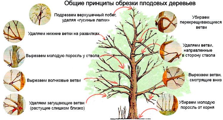 обрезка плодовых деревьев в саду
