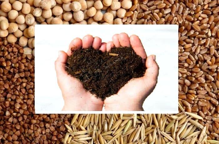 смесь сидератов для улучшения почвы