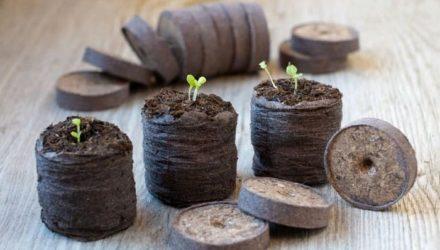 Торфяные таблетки для рассады — как пользоваться, преимущества и недостатки