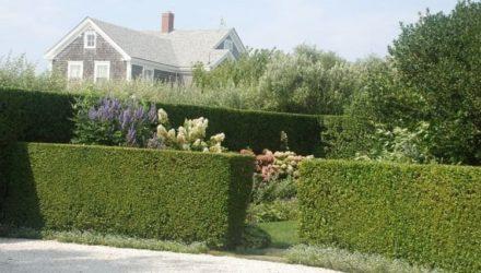 Живая изгородь – фото, какие растения, на каком расстоянии сажать