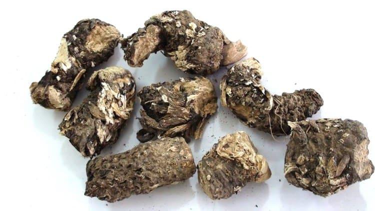 корневище горца змеиного - использование в кулинарии