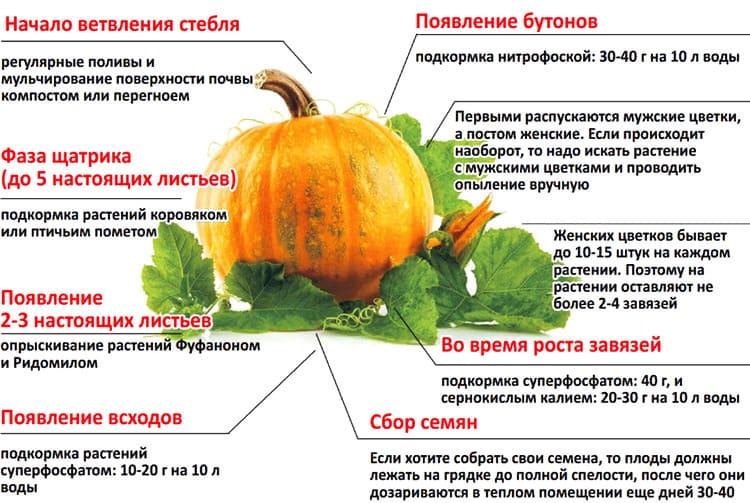 подкормка тыквы